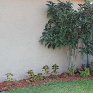 Florida Gardenning