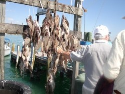 Port St Lucie Fishing