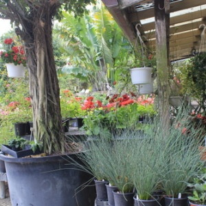 Weatherbee Nursery Fort Pierce Florida